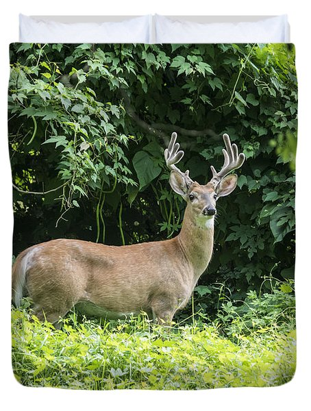Eastern White Tail Deer Duvet Cover