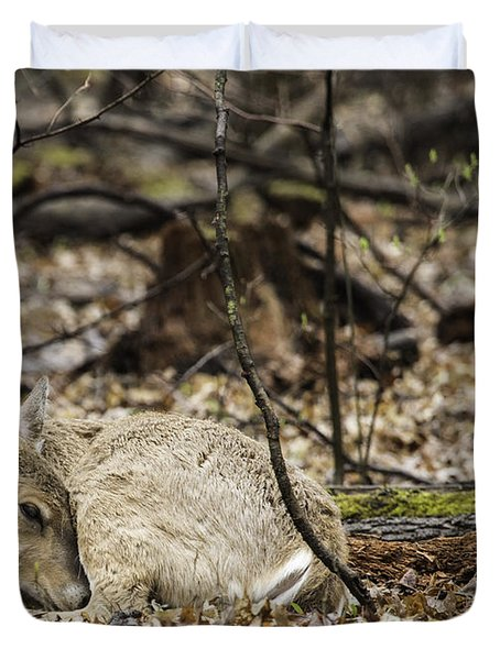 Deer Sleeping In The Woods Photograph By Jeannette Hunt