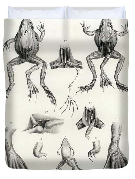 Deformed Frogs - Historic Duvet Cover