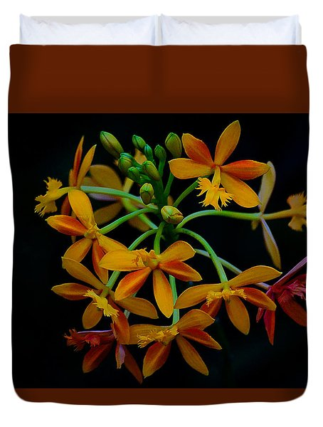 Delicate Orchid Display Duvet Cover