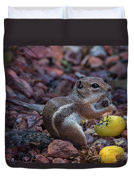Desert Antelope Squirrel Munching On Cactus Fruit Duvet Cover