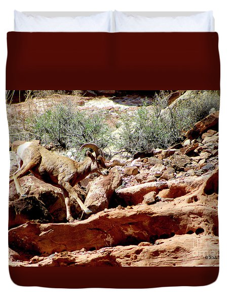 Desert Bighorn Ram Walking The Ledge Duvet Cover