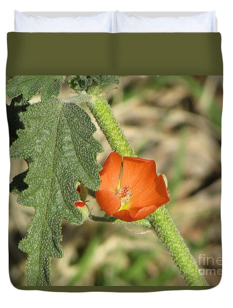 Desert Globemallow Bloom 202 Duvet Cover