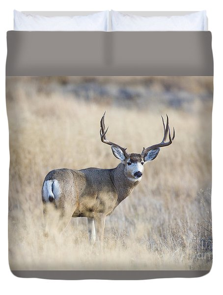 Desert King Duvet Cover