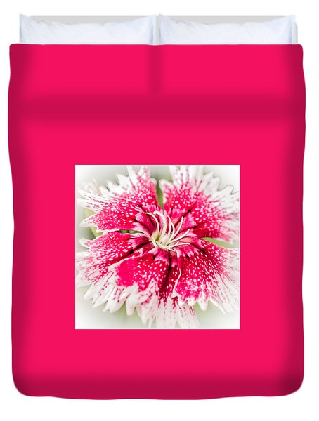 Dianthus Beauty Duvet Cover by Yeates Photography