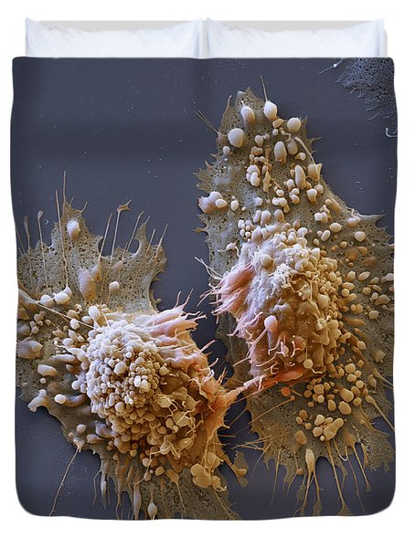Dividing Cancer Cells, Sem Duvet Cover