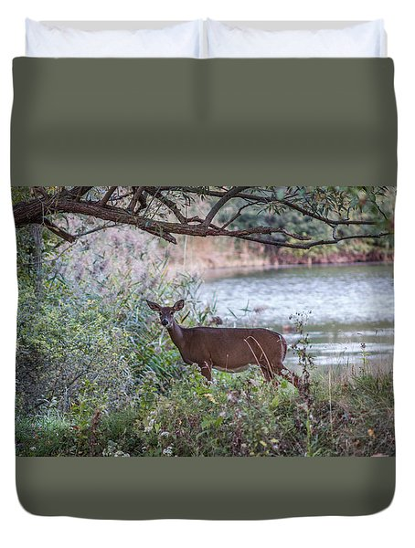 Duvet Cover featuring the photograph Doe Under Arching Branches by Chris Bordeleau