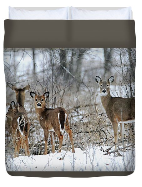 Does And Fawns Duvet Cover by Brook Burling