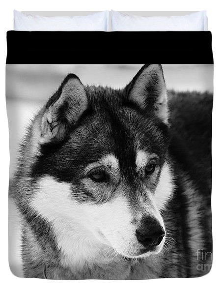 Dog - Monochrome 3 Duvet Cover