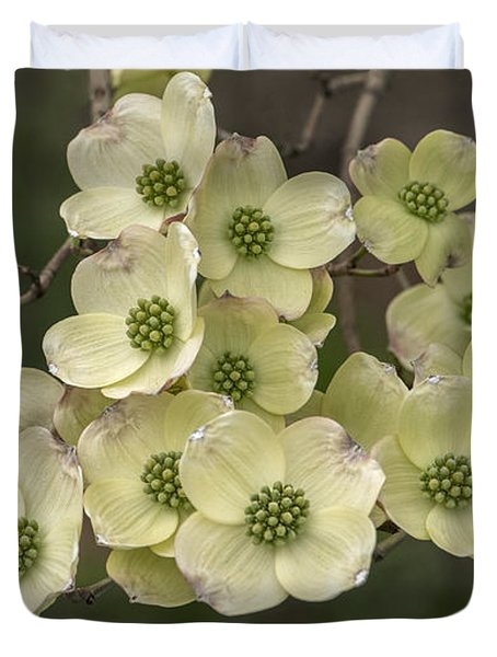 Dogwood Dance In White Duvet Cover by Don Spenner