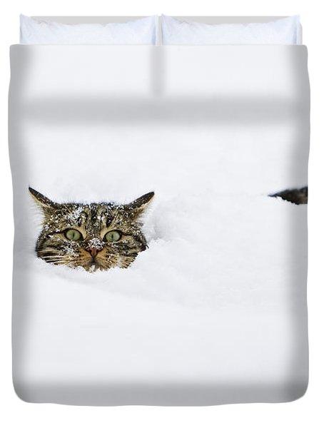 Domestic Cat Felis Catus In Deep Snow Duvet Cover