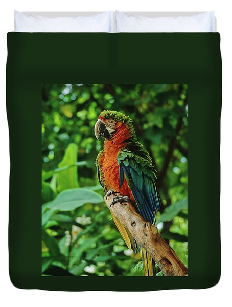 Duvet Cover featuring the photograph Don't Ruffle My Feathers by Marie Hicks