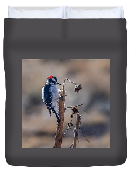 Downy Woodpecker Finding Insects From Sunflower Stem. Duvet Cover