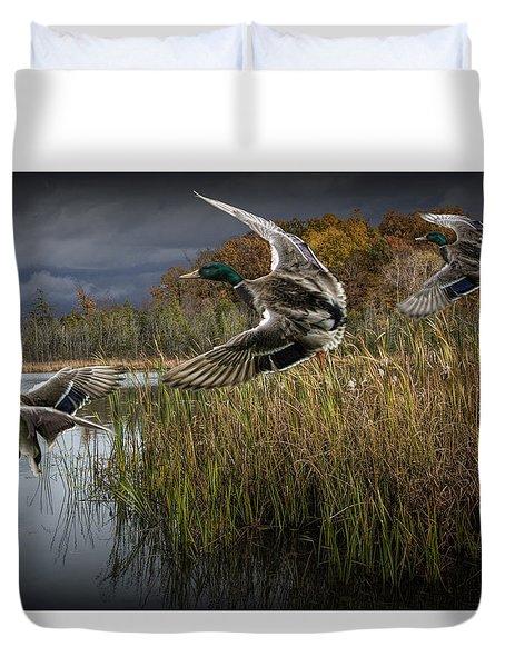 Drake Mallard Ducks Coming In For A Landing Duvet Cover