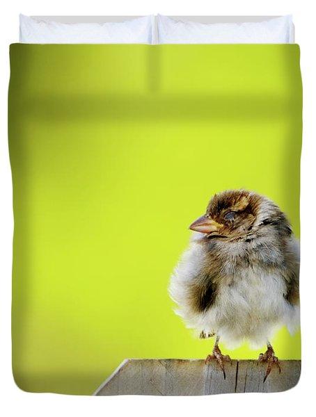 Dream Sparrow Duvet Cover by Betty LaRue