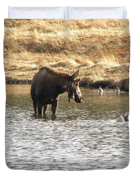 Ducks - Moose Rollinsville Co Duvet Cover