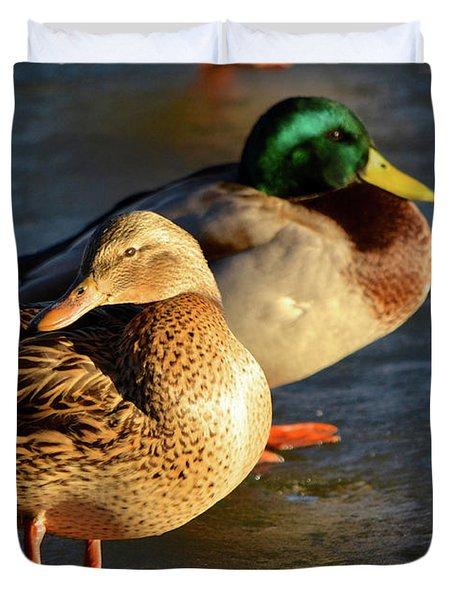 Duck Pair Sunbathing On Frozen Lake Duvet Cover