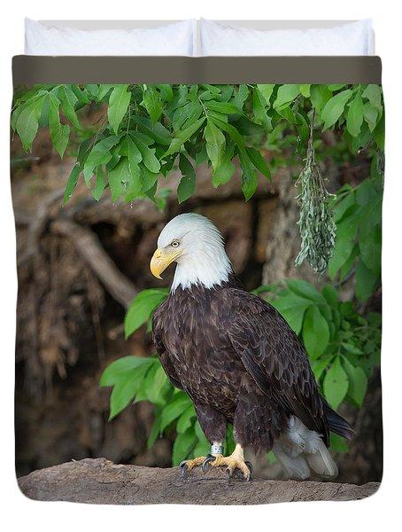 Eagle Closeup Duvet Cover