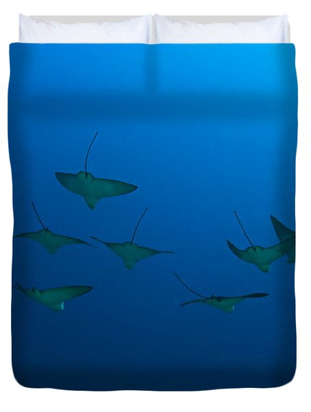 Eagle Rays In Ocean Duvet Cover by Dave Fleetham - Printscapes
