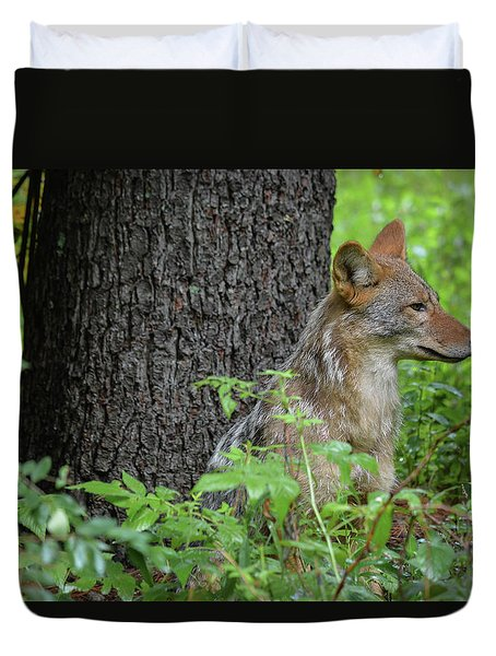 Early Morning Coyote In Maine Duvet Cover