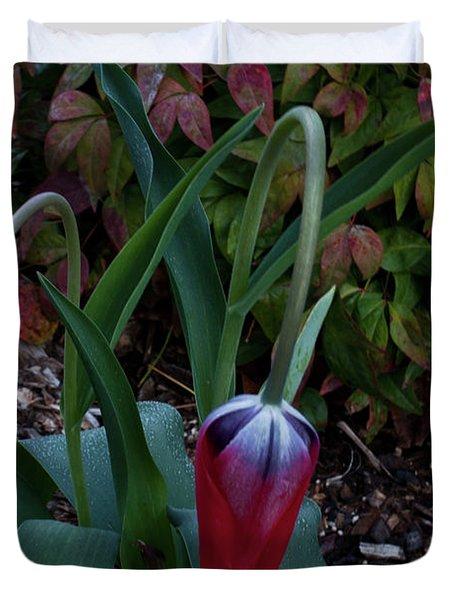 Early Morning Nodding Tulips Duvet Cover