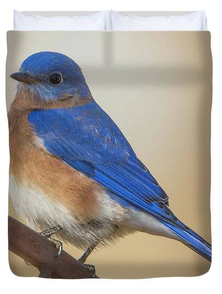 Eastern Blue Bird Male Duvet Cover