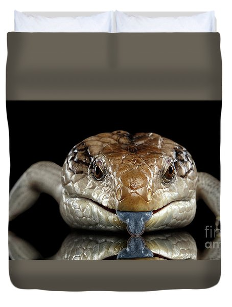 Eastern Blue-tongued Skink, Tiliqua Scincoides, Isolated On Black Background Duvet Cover by Sergey Taran