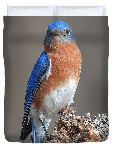 Eastern Bluebird Dsb0300 Duvet Cover