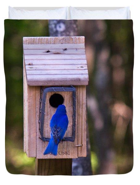 Eastern Bluebird Entering Home Duvet Cover by Douglas Barnett
