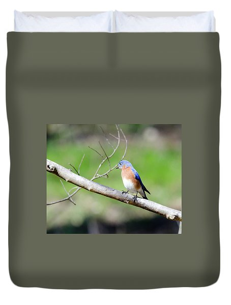 Eastern Bluebird Duvet Cover by George Randy Bass