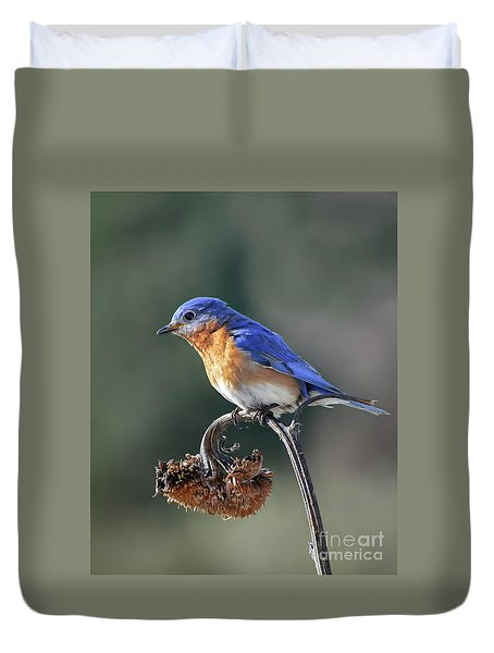 Eastern Bluebird In Spring Duvet Cover