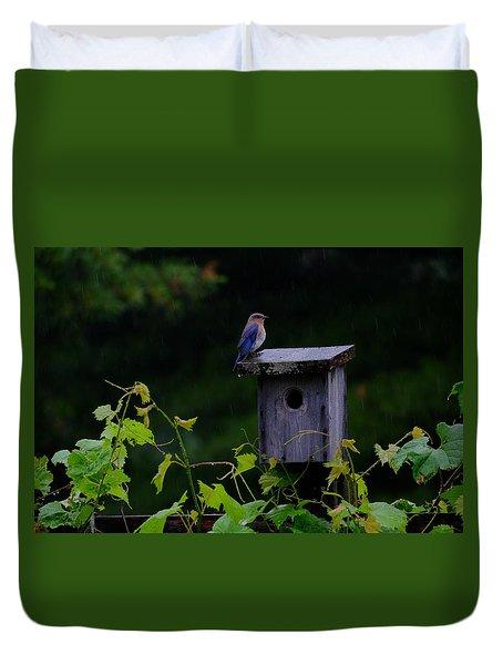 Eastern Bluebird In The Rain Duvet Cover