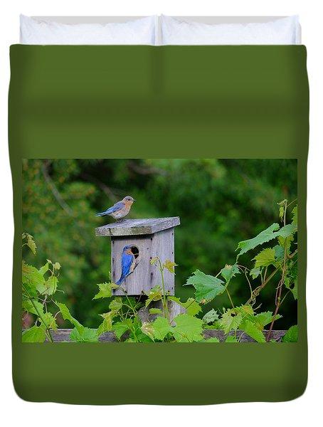 Eastern Bluebird Pair Duvet Cover