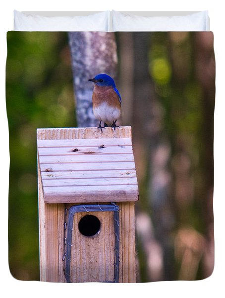 Eastern Bluebird Perched On Birdhouse 4 Duvet Cover