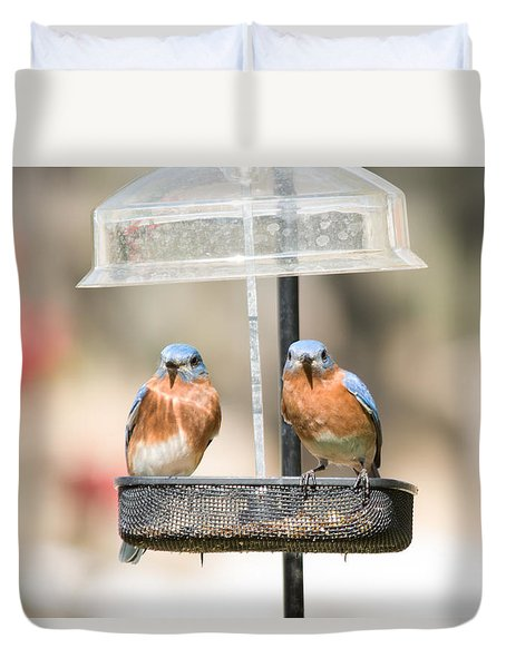 Eastern Bluebirds Duvet Cover