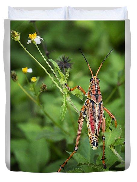 Eastern Lubber Grasshopper  Duvet Cover