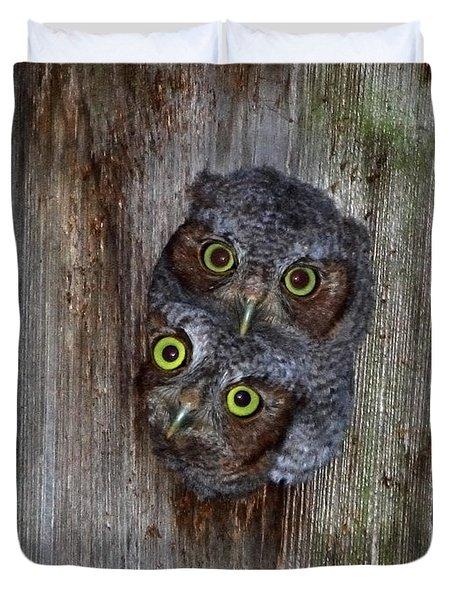 Eastern Screech Owl Chicks Duvet Cover