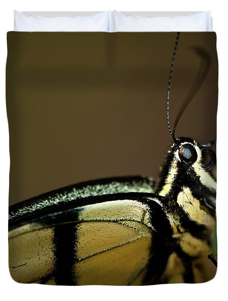 Eastern Tiger Swallowtail Butterfly Duvet Cover by  Onyonet  Photo Studios