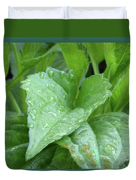Echinacea After The Rain I Duvet Cover