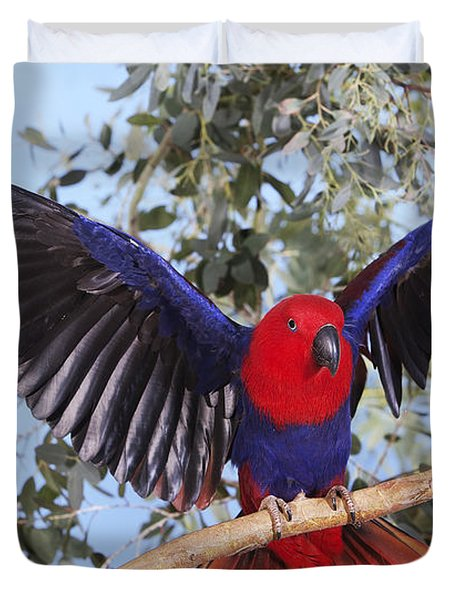 Eclectus Parrot Eclectus Roratus Duvet Cover
