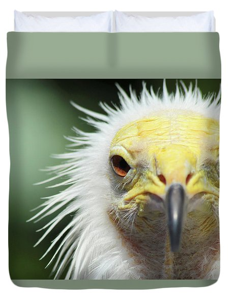 Egyptian Vulture Duvet Cover