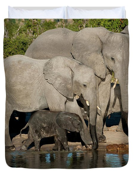 Elephant 3 Duvet Cover