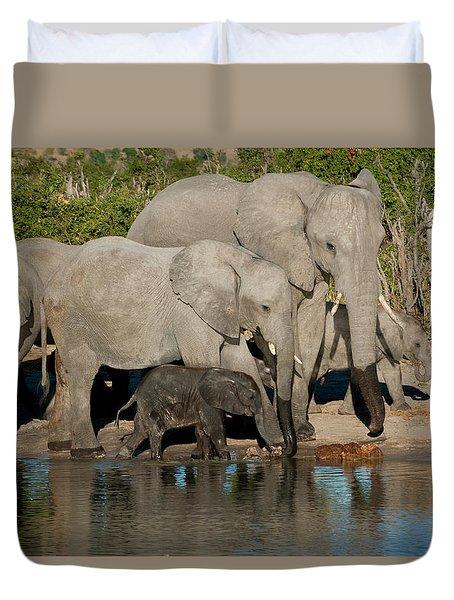 Elephant 3 Duvet Cover