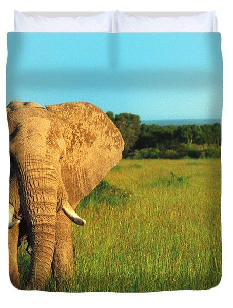 Elephant Duvet Cover by Sebastian Musial