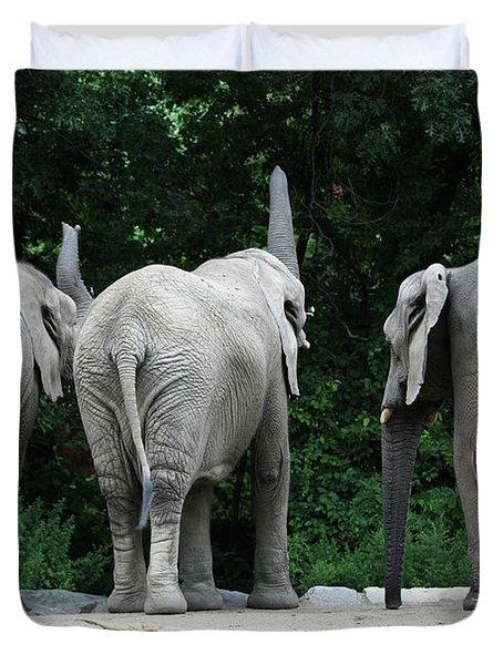 Elephant Trio Duvet Cover by Karol Livote