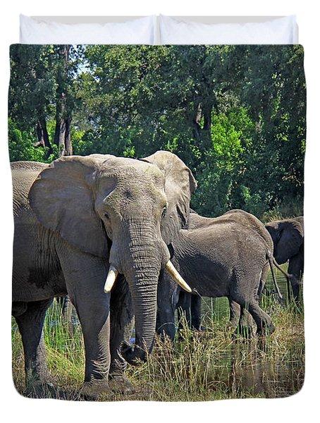Elephants 3 Duvet Cover