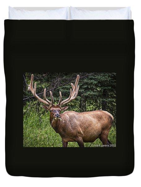 Elk Buck Duvet Cover