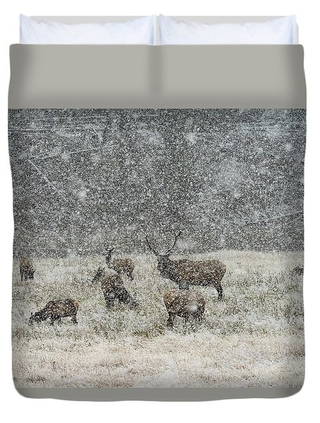 Elk Harem In Falling Snow Duvet Cover