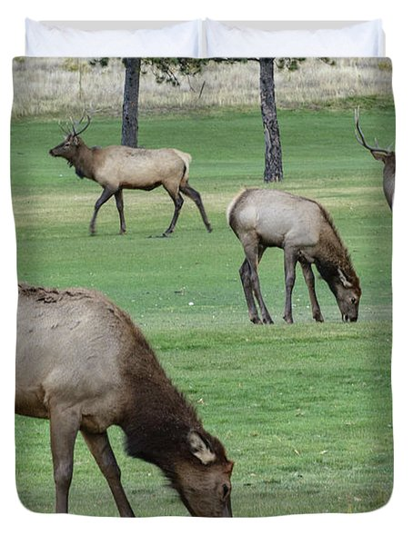 Elk On Golf Course Estes Park Colorado Duvet Cover