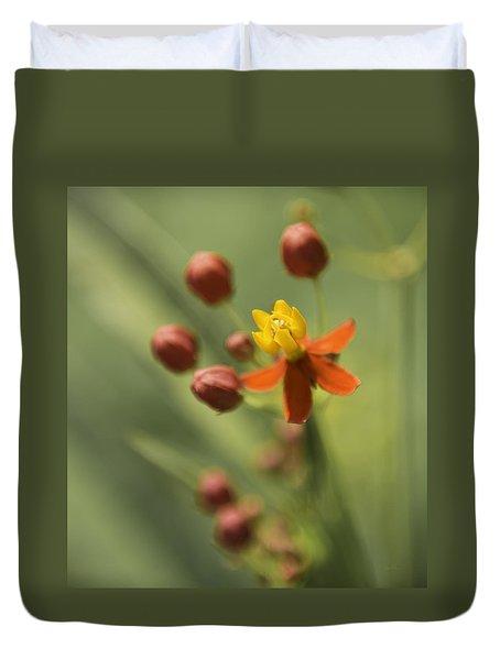 Emergence - Asclepias Curassavica - Butterfly Milkweed - South Carolina Botanical Gardens Duvet Cover by Johan Hakansson